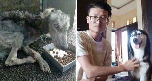 husky salvat de la moarte