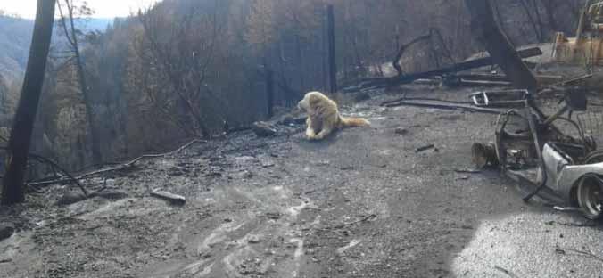 caine incendiu california