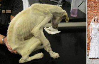 cel mai slab câine din lume