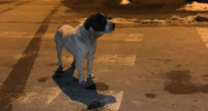 câine abandonat de stăpân