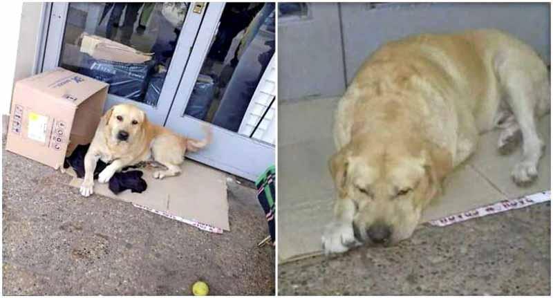 câine care îşi aşteaptă stăpânul