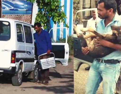 ambulanță cu care salvează câinii