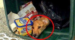 câine legat şi aruncat la gunoi