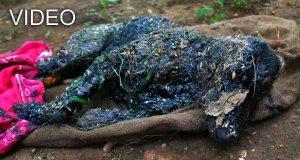 câine cade în smoală fierbinte