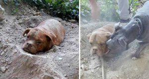 a îngropat de viu un câine
