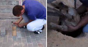 căţeluşă a fost scoasă de sub trotuar