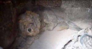 caine care a supravietuit in incendiul din grecia