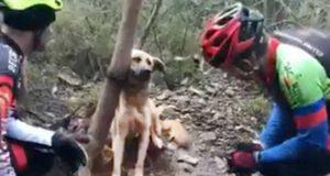 câine lăsat să moară