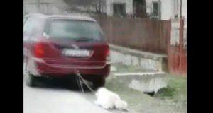 viceprimarul care a legat câinele de maşină