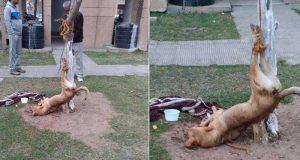 lege pentru protecţia animalelor