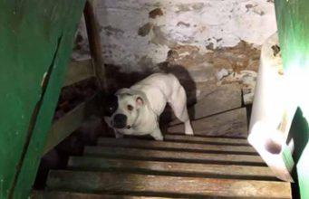 câine legat în pivniţă