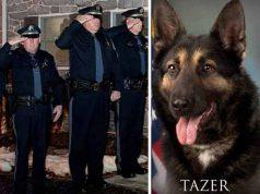 câine poliţist bolnav de cancer
