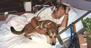 câinele refuză să-şi părăsească stăpânul bolnav