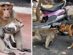 o maimuţă adoptă un câine