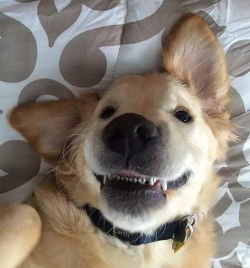 căţel cu aparat dentar