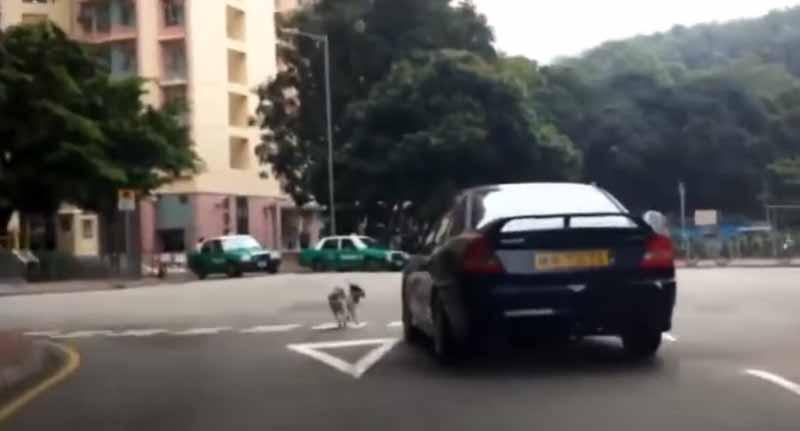 câine abandonat de stăpân fuge