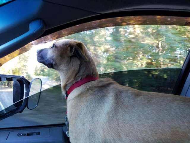 câine in masina