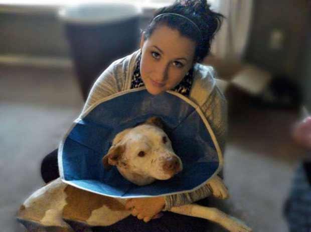 câinele urma să fie eutanasiat