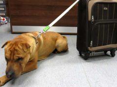 câine a fost abandonat într-o gară
