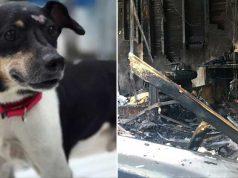 câine moare în incendiu