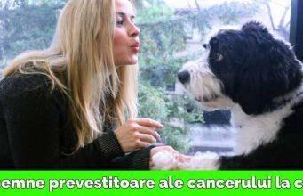 cancer la câini