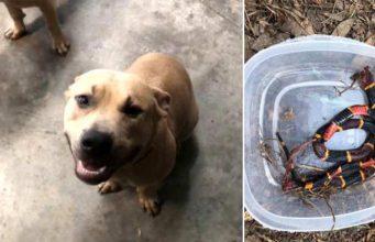 câine a murit protejând doi copii