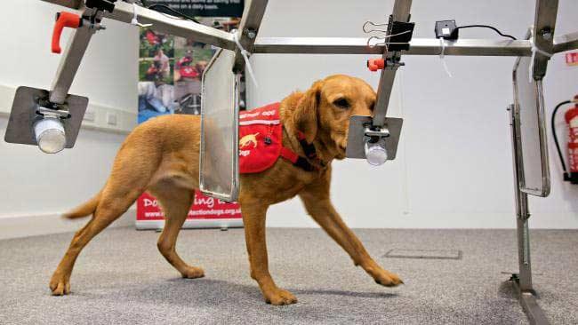 câinii pot detecta cancerul