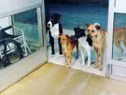 patru câini îl aşteptau la uşă