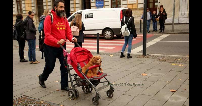 plimbă căţelul bolnav în cărucior