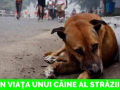 viaţa unui câine