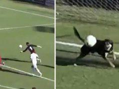 câine a apărat o minge