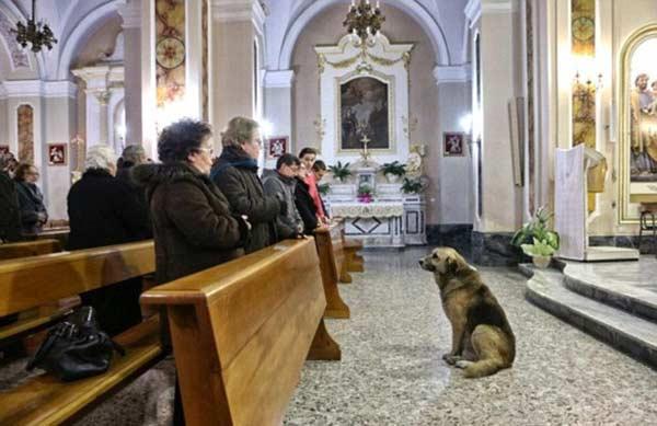 câine merge zilnic la biserica