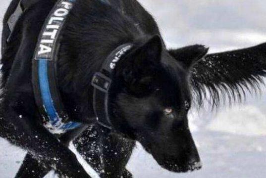 câinele care a prins autorul dublei crime