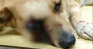 petardă în gura unui câine