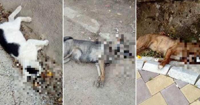 câini ucişi