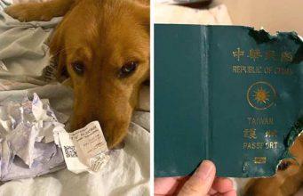 câine distrus paşaportul