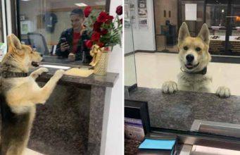 câine a mers la secţia de poliţie
