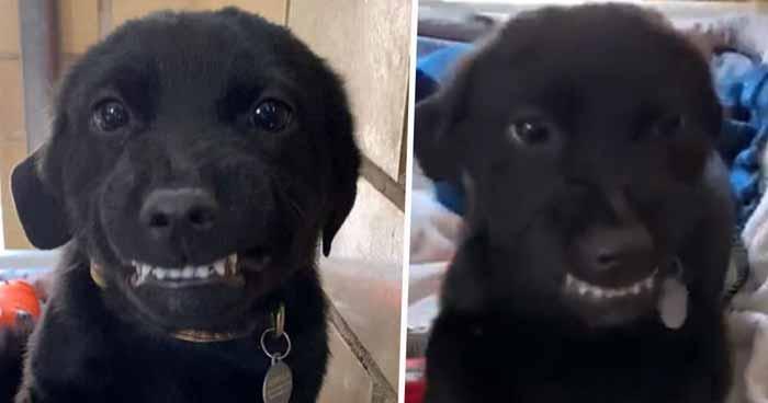 câine zâmbeşte cu dinţii