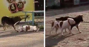câine legat de gard