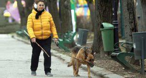 câinele irinei loghin