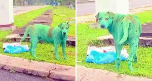câine vopsit în verde