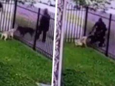 poliţistă a împuşcat un câine