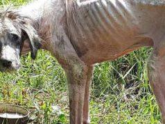 câine a ajuns piele și os