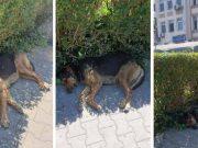 câine își așteaptă stăpânul în fața Spitalului