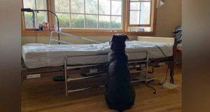 refuză să plece de lângă patul de spital