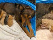 căţeluşă a adoptat trei pisicuţe