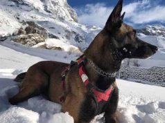 câine salvator a supravieţuit 16 zile