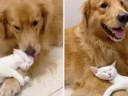 câine şi o pisică