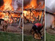 câine salvat din incendiu