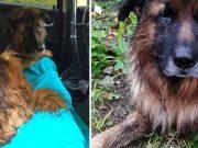câine stăpânii i-au făcut injecţia letală